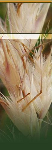 Seeding Victoria Inc